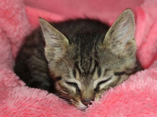 周公解梦 做梦梦到杀猫