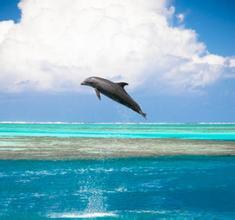 周公解梦 做梦梦到鱼在天上飞