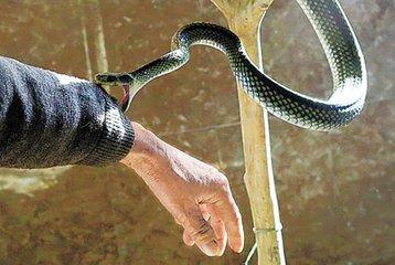 周公解梦 做梦梦到被蛇咬