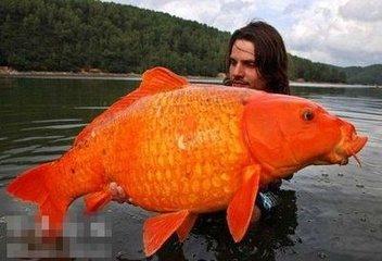 周公解梦梦见怪鱼