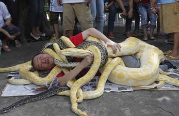 周公解梦 做梦梦见很多蛇缠身