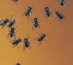 周公解梦 做梦梦见很多死苍蝇