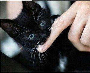 周公解梦梦到猫
